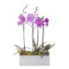 orchids Singapore delivery