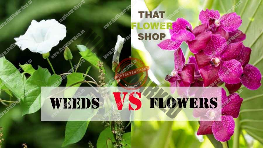Weeds vs. Flowers: What's the Difference?