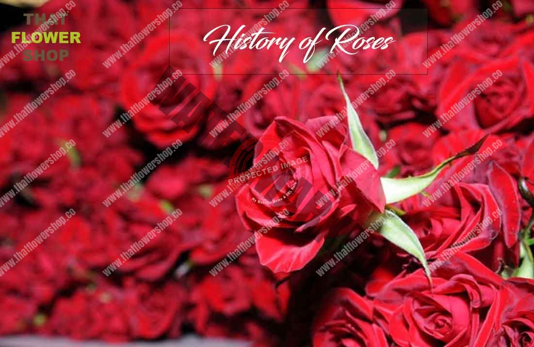 History of Roses | The Use of Roses Throughout Time
