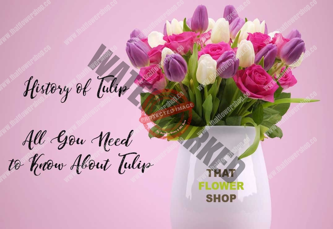 All You Need to Know About Tulip | History of Tulip | Facts about Tulip | Tulip Care | Meaning of Tulip