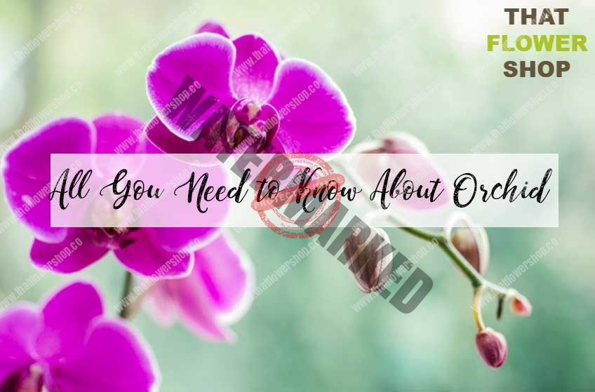 All You Need to Know About Orchid| History of Orchid | Facts about Orchid | Orchid Care | Meaning of Orchid