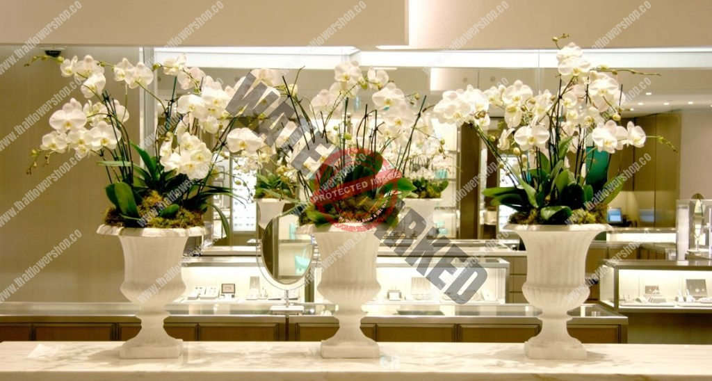 Monthly white ORCHID​ Flower SUBSCRIPTION singapore
