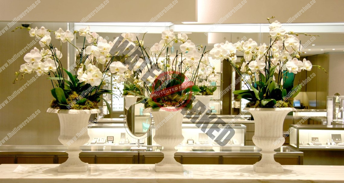 Why Are Orchids So Expensive in Singapore?