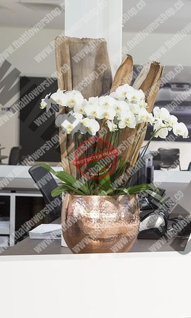 Weekly White ORCHID flower delivery ​​SUBSCRIPTION Singapore