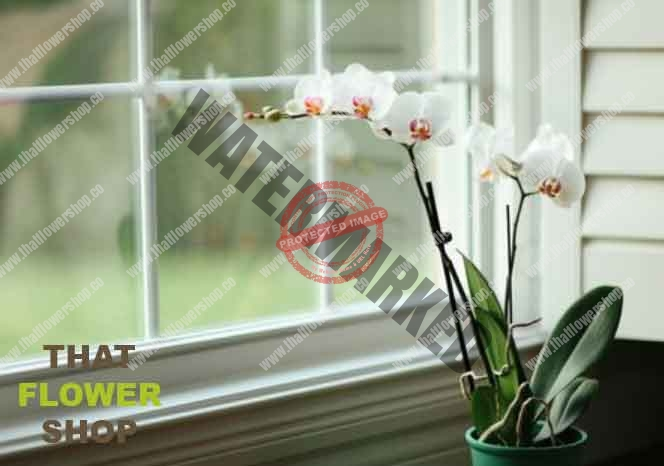 Can An Orchid Survive Without Leaves That Flower Shop
