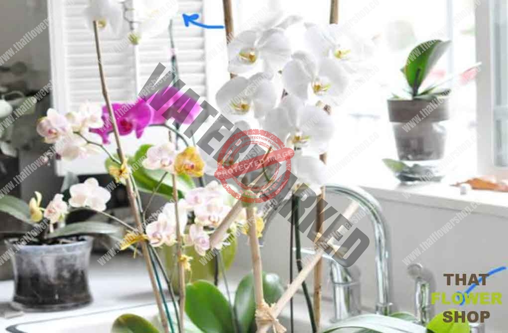 Do Orchids Need Soil?
