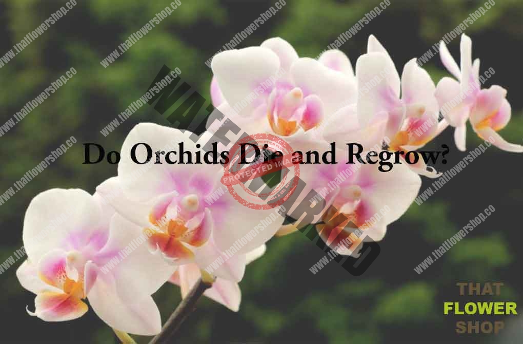 Do Orchids Die and Regrow?