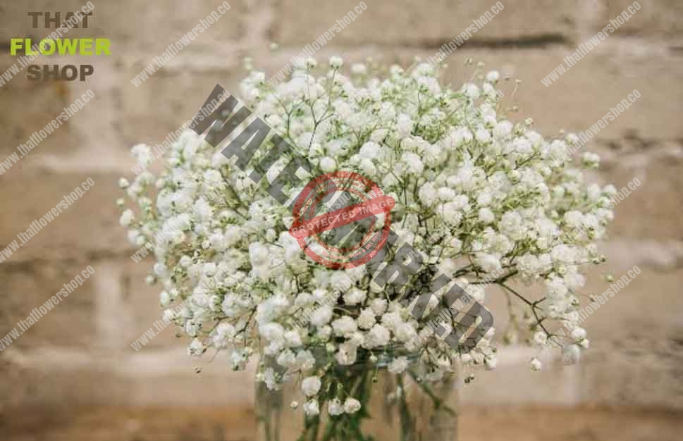 How Long Does Baby S Breath Last That Flower Shop