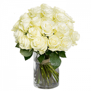 shop 24 stalk white roses in vase