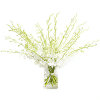 15 stems white dendrobium orchid