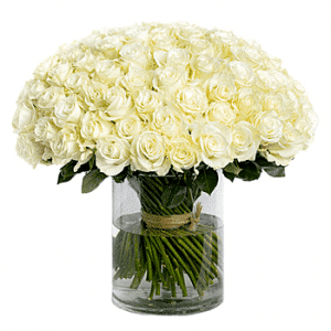 99 stalk white roses in cylinder vase