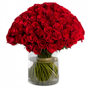 99 stems red roses in cylinder vase