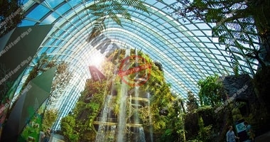 Get Amazed in Singapore's Cloud Forest