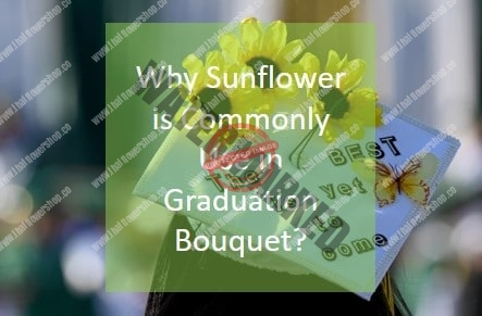 Why Sunflower is Commonly Use in Graduation Bouquet?