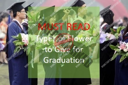 The Most Beautiful Types of Flower to Give for Graduation
