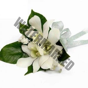 white orchid corsage boutonniere